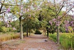 Rosa träd i vår Royaltyfri Fotografi