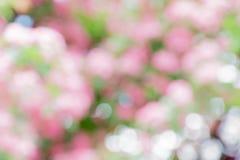 Rosa träd som blommar, suddig horisontalbakgrund, bokeh Arkivfoto
