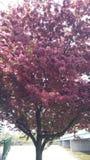 rosa tree Royaltyfri Bild