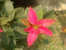 rosa tree för blomma arkivfoto