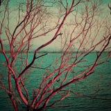 Rosa trockener Baum der Weinlese am See Stockbilder