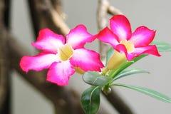 Rosa tropische Blumen auf unscharfem Hintergrund lizenzfreie stockbilder