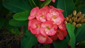 Rosa tropischer Blumenstrauß von Blumen stockbild