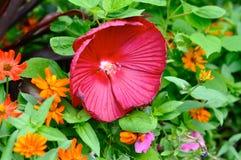 rosa tropiskt för blommor arkivbilder