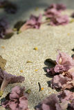 Rosa trumpetblomma på jordningen Fotografering för Bildbyråer