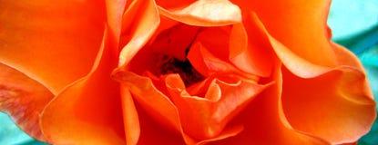 Rosa tryck för konst för tapet för blommamakrobakgrund royaltyfria foton