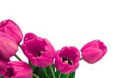 Rosa Tulip Border Arkivfoto