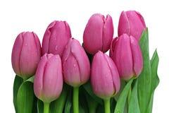 Rosa Tulip Bouquet Lizenzfreies Stockbild