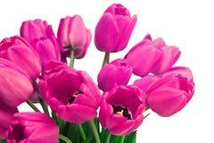 Rosa Tulip Bouquet Arkivbild