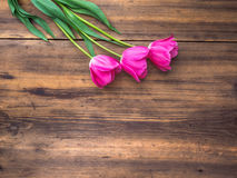 Rosa tulpan, blom- ordning på träbakgrund från gamla bräden och ett utrymme för meddelanden Bakgrund för moder` s Arkivbilder