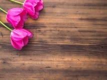 Rosa tulpan, blom- ordning på träbakgrund från gamla bräden och ett utrymme för meddelanden Bakgrund för moder` s Royaltyfria Bilder