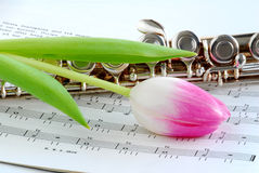 rosa tulpan för flöjt Arkivbild