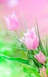rosa tulpan för grupp Arkivbild