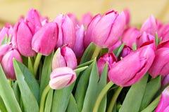 rosa tulpan för grupp Royaltyfria Bilder