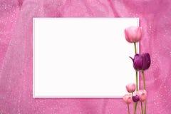rosa tulpan för ram Arkivbild