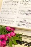 Rosa tulpan och anmärkningar rosa tulpan Royaltyfri Fotografi