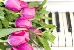 Rosa tulpan och anmärkningar rosa tulpan Royaltyfri Bild