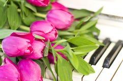 Rosa tulpan och anmärkningar rosa tulpan Arkivbilder