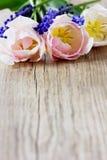 Rosa tulpan och blåa hyacinter arkivfoto
