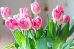 Rosa tulpan på abstrakt bakgrund pink tulpan Tulpan Blommor Royaltyfri Foto