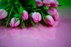 Rosa tulpan på rosa bakgrund, easter bakgrund Arkivfoton