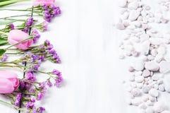 Rosa tulpan på en vit träbakgrund royaltyfri bild