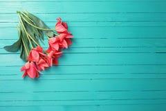 Rosa tulpan på turkos målad träbakgrund arkivfoton