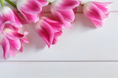 Rosa tulpan på vita träplankor Royaltyfria Foton