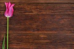 Rosa tulpanblomma på trätabellbakgrund med kopieringsutrymme Royaltyfria Foton