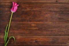 Rosa tulpanblomma på trätabellbakgrund med kopieringsutrymme Arkivfoton