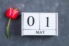 Rosa Tulpe auf grauem konkretem Hintergrund und Kalender Mai 1. Tag des Frühlinges und der Arbeit stockbild