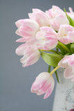 Rosa Tulpen Stockbilder