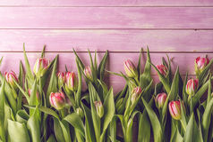 Rosa Tulpen auf rosa hölzernem Hintergrund, fröhliche Ostern, Frühjahr Lizenzfreies Stockbild