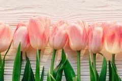 rosa Tulpen auf weißer rustikaler hölzerner Hintergrundebenenlage Frühling t Lizenzfreie Stockfotografie