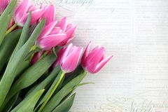 Rosa Tulpen auf Weinlesepapierhintergrund Lizenzfreie Stockfotos