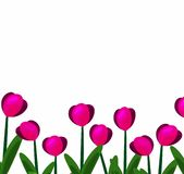 Rosa Tulpen background-01 stock abbildung