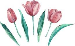 Rosa Tulpen clipart Unterschiedliche Elemente des von Hand gezeichneten Aquarells lokalisiert auf weißem Hintergrund vektor abbildung