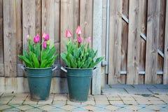 Rosa Tulpen in den metallischen Töpfen mit hölzernem Ti des Hintergrundes im Frühjahr Stockbild