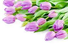 Rosa Tulpen mit Wassertropfen Lizenzfreie Stockfotos