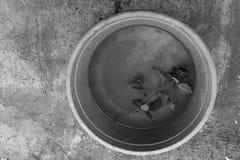 Rosa in una ciotola con acqua in bianco e nero Immagini Stock Libere da Diritti