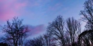Rosa und blauer nächtlicher Himmel und Zweige. Stockfotos
