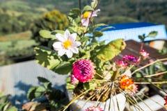 Rosa und bunte Blumen in einem Vase Lizenzfreies Stockbild