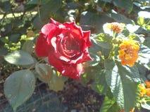 Rosa und gebürtige Blumen zusammen lizenzfreie stockfotos