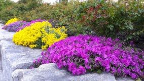 rosa und gelbe Blume auf Stein Lizenzfreies Stockbild