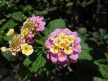 Rosa und gelbe Blumen stockfotos