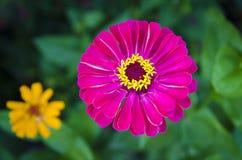 Rosa und gelbe Blumen Stockfoto