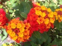 Rosa und gelbe Blumen Stockbild