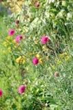 Rosa und gelbe Sommerwiesenblumen Stockfotos