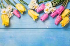 Rosa und gelbe Tulpen und weiße Narzissen blüht auf Blau anflehen Lizenzfreies Stockfoto