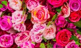 Rosa und purpurrote Rosen für romantischen Valentinsgruß-Tag lizenzfreie stockfotografie